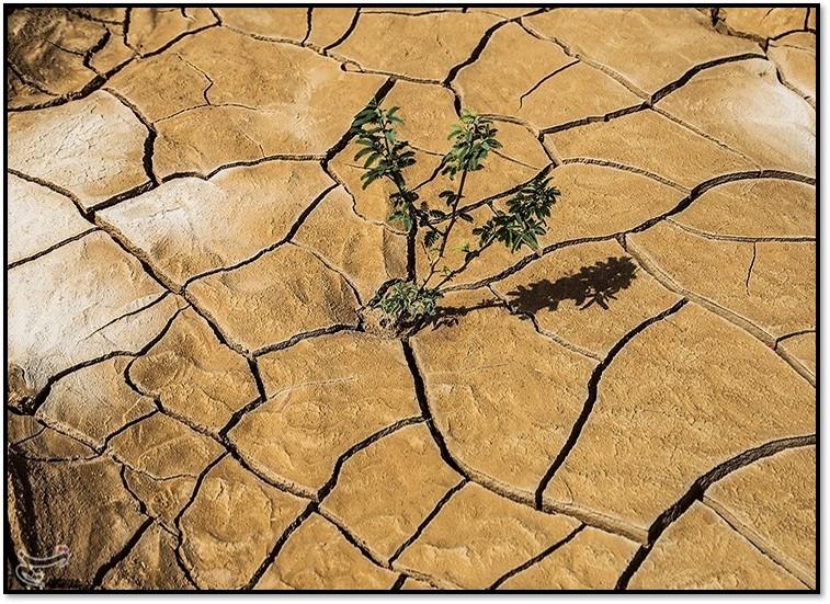 Khuzestan soil